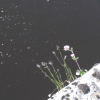 цветы чужой планеты