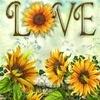addie71: Sunflower Love