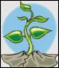росток