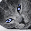 coldpaws userpic