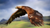 орел полет