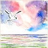 Birds: Seagull over sea