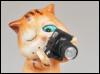 кот-фотогаф