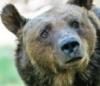 медвед-озадачен