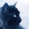 Cat-lunar