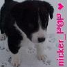 nicker_pop userpic