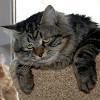 Мудрый кот