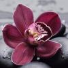 цветы на подоконнике, орхидейные хроники