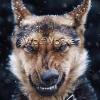 https://t.me/wolfworker