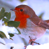 Birds: Robin & Leaf (Winter)