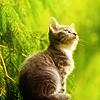 alwaysashipper: cat up