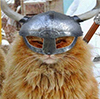Кот Трувор