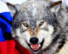 волк, луганский, дэн луганский, Россия, дэн