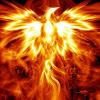 phoenix, bird, fire