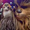 ChewiePorg