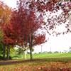 scenes-autumn