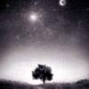 Nature: Moon (Tree)