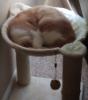 Sleepy hammock Mephisto