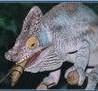 xameleon userpic