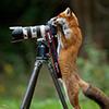 лис фотограф