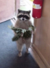 plush_koala