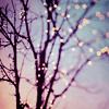 Christmas: tree lighs