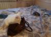 Лотос, new, cats, Хасан