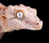 внутренний рептилоид