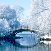 Winter: Trees (Bridge & water)