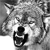 ярость, злость, волчара позорный