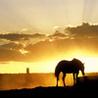 выйду ночью в поле с конем