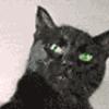 черный кошак