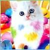 котенок в краске