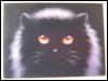 кот, чёрный