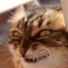 Ехидный кот