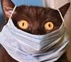 Кошка в маске