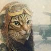 kot-pilot