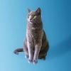 Stock: Cat
