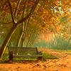 Autumn: Trees (Bench)