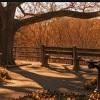 brooklyn autumn trees
