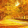 Autumn: Trees (Golden)