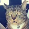 Понедельничный кот