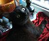 Кошка Васька