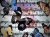 Бабочки на нотах