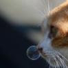 Кот с со