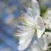 #сновавесна, весна, май