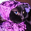 cat babushka kitty purple