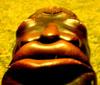 skopidom userpic