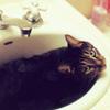 cat sink