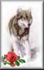 wolfrose userpic